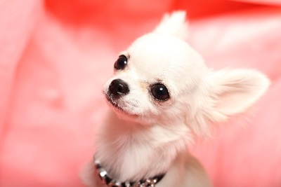 名古屋市内34店舗のペットサロン(犬の美容室)トリミング料金を調べてみた。