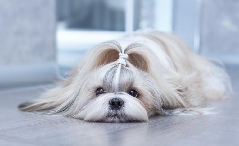 犬の毛にもキューティクルってあるの?