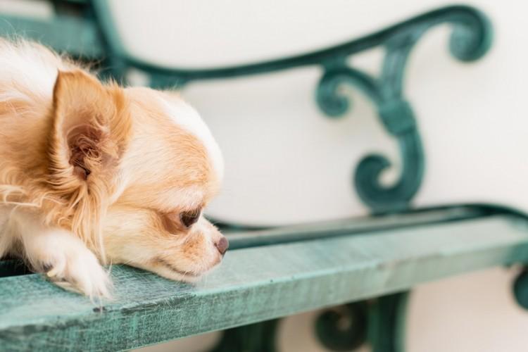 犬の涙やけ(涙焼け)