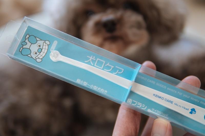 【超小型犬向け】我が家で使っている歯ブラシ。チワワ、トイープードルにおすすめです。