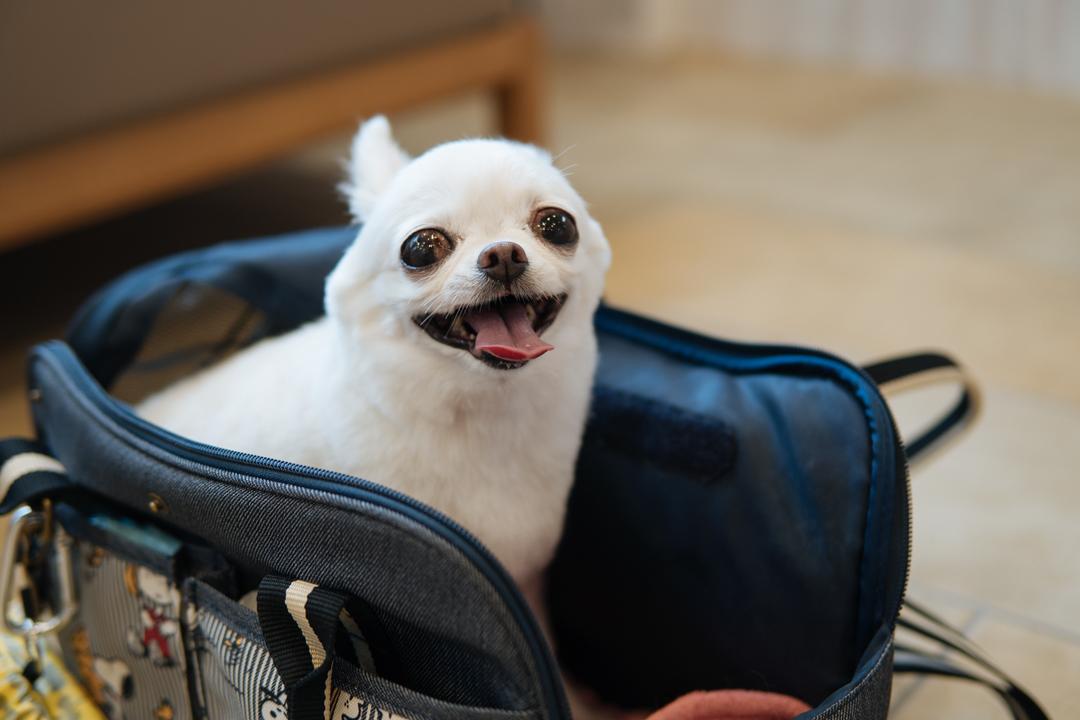 プレオープン10日目 幸せそうな保護犬とミックスちゃん