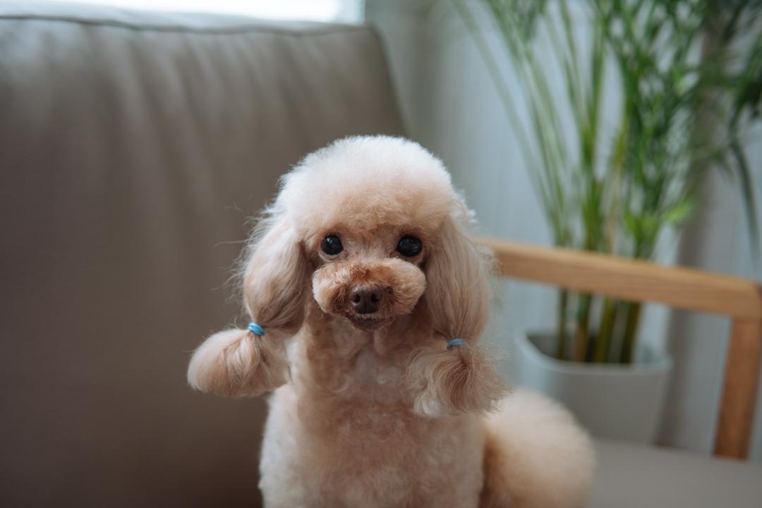 【犬の行動分析学】ご褒美を使ったしつけトレーニング