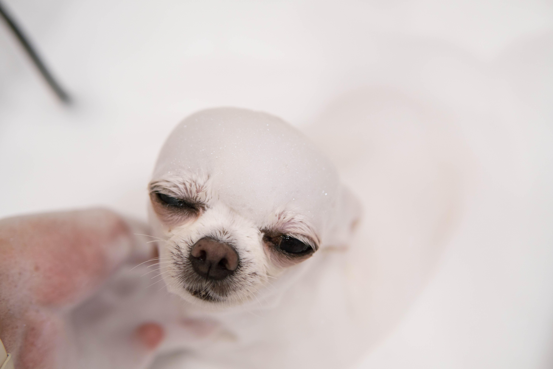お家で愛犬をシャンプーする時のポイント