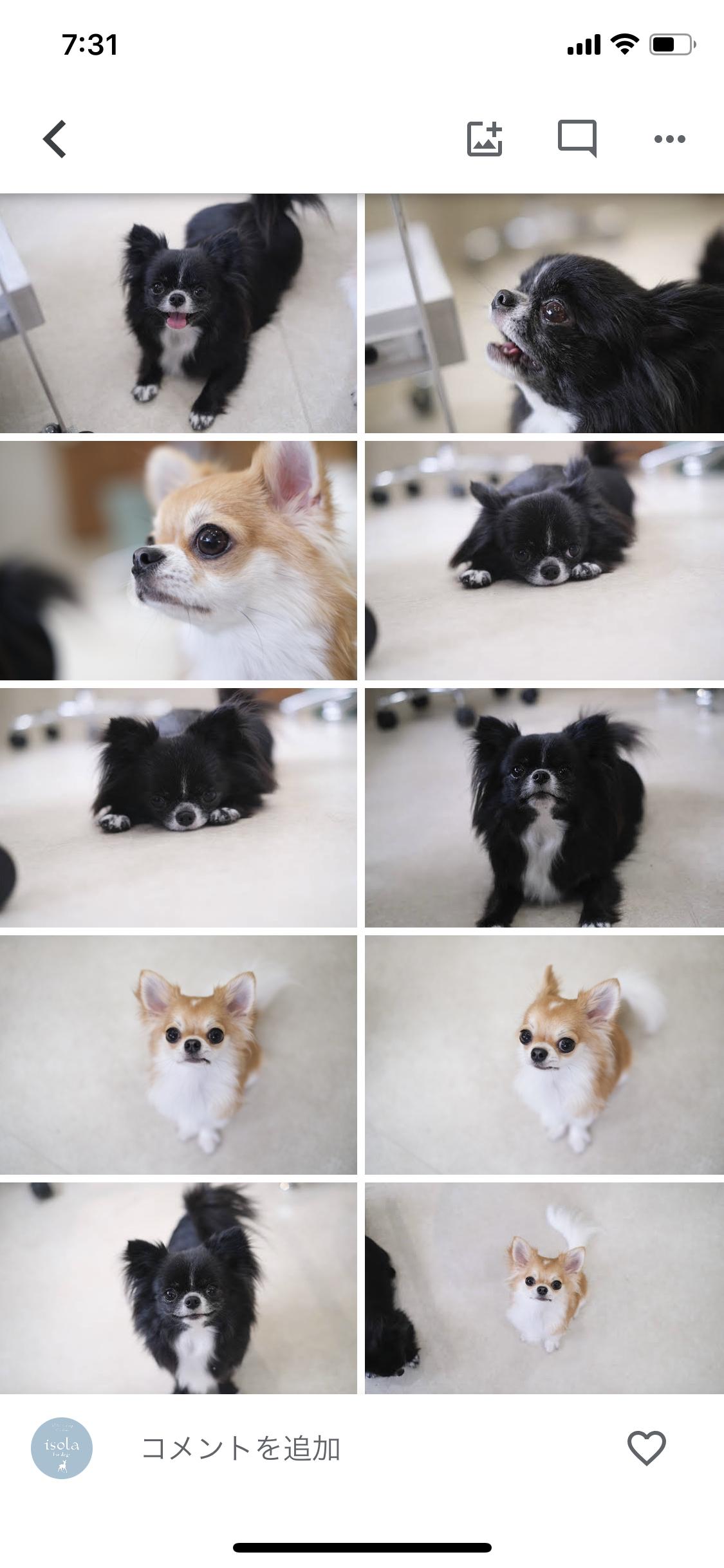 インスタ映えする犬写真